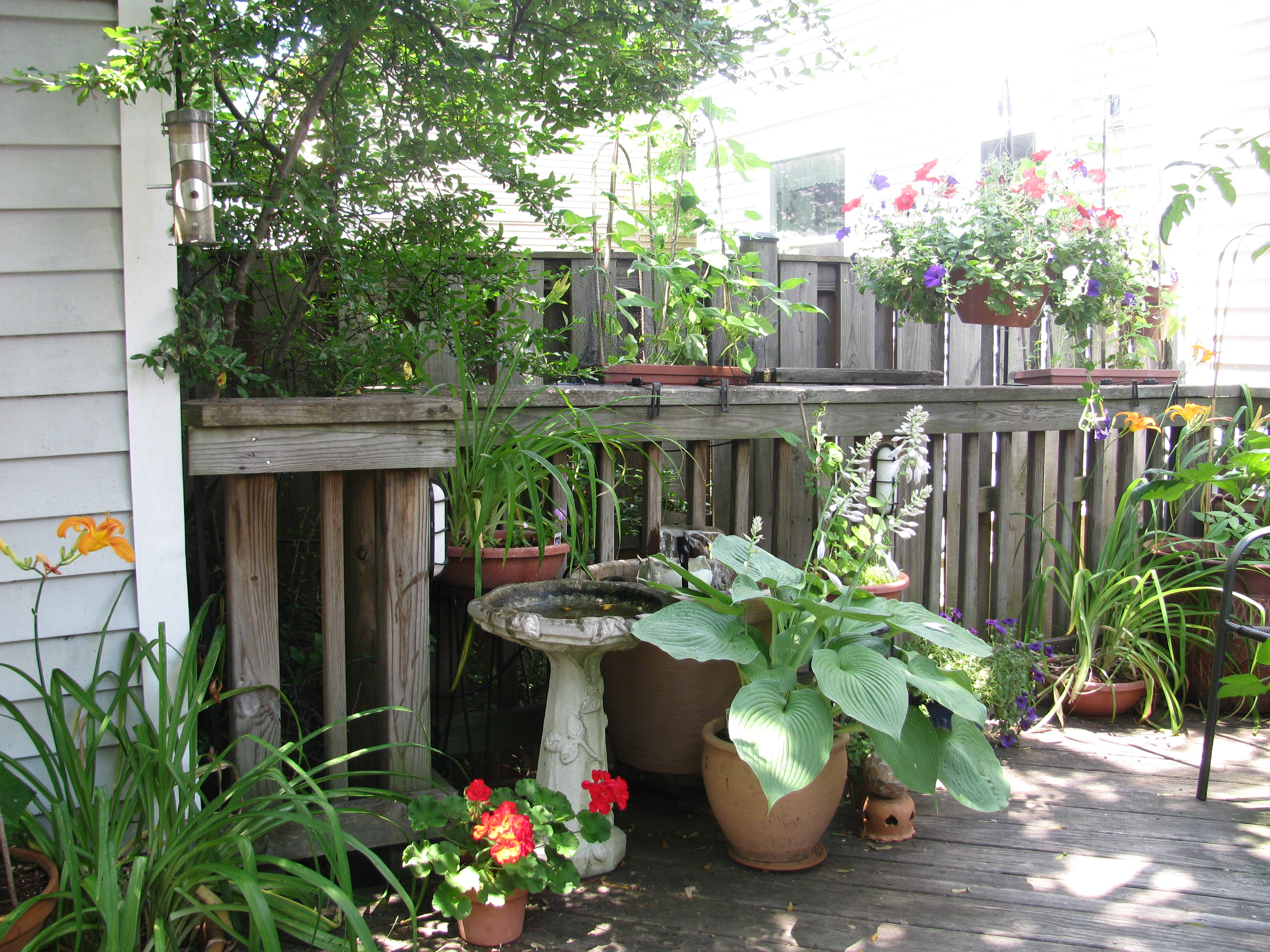 Tuesday Terrific Backyard Gardening