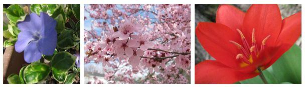 pollen composite